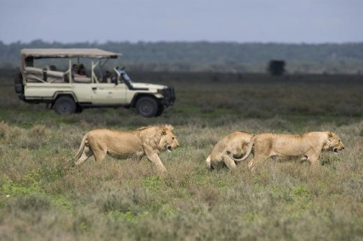 Africa; Tanzania; Sanctuary Kusini Camp; Serengeti Game Drive