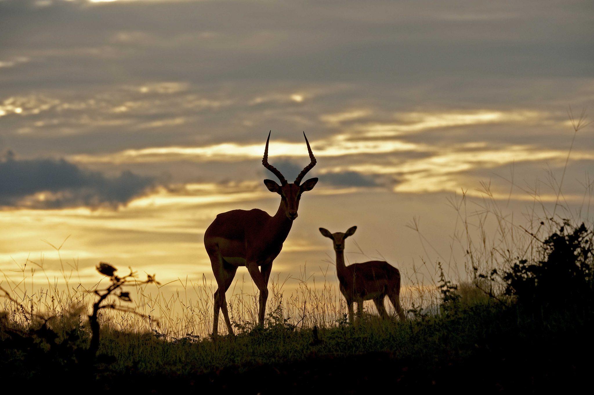 Safari Tour Zambia January