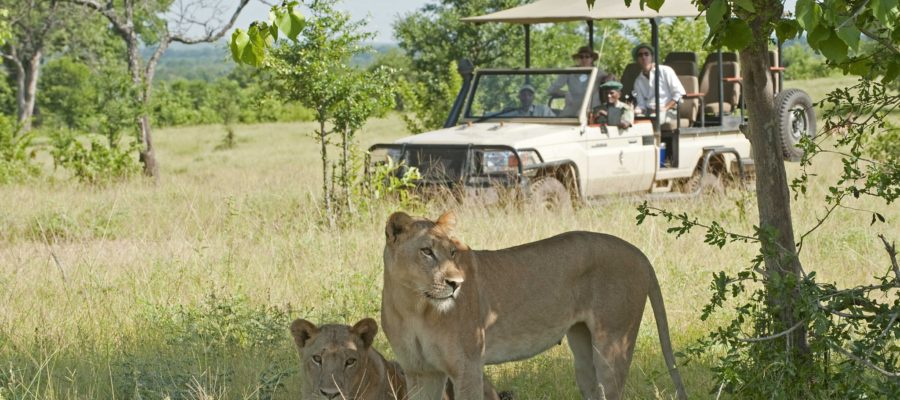 Africa; Zambia; Sanctuary Chichele Presidential Lodge; Guests on a game drive watching lions