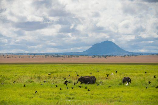 Africa; Tanzania; Sanctuary Swala; Scenery